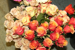 Yellow-Coral ~ Antique Peach Roses