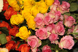 Pink~Yellow~Orange Roses