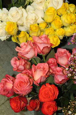 White~Yellow~Salmon Roses