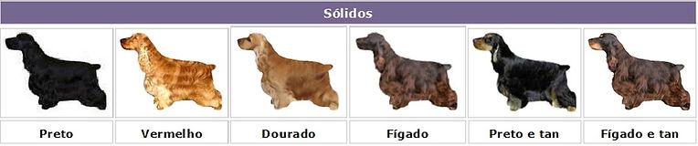 cores sólidas dos cães da raça Cocker Spaniel Inglês