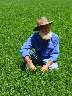Young organic lucerne