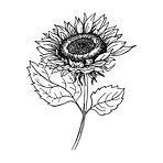 sunflower sketch_edited.jpg