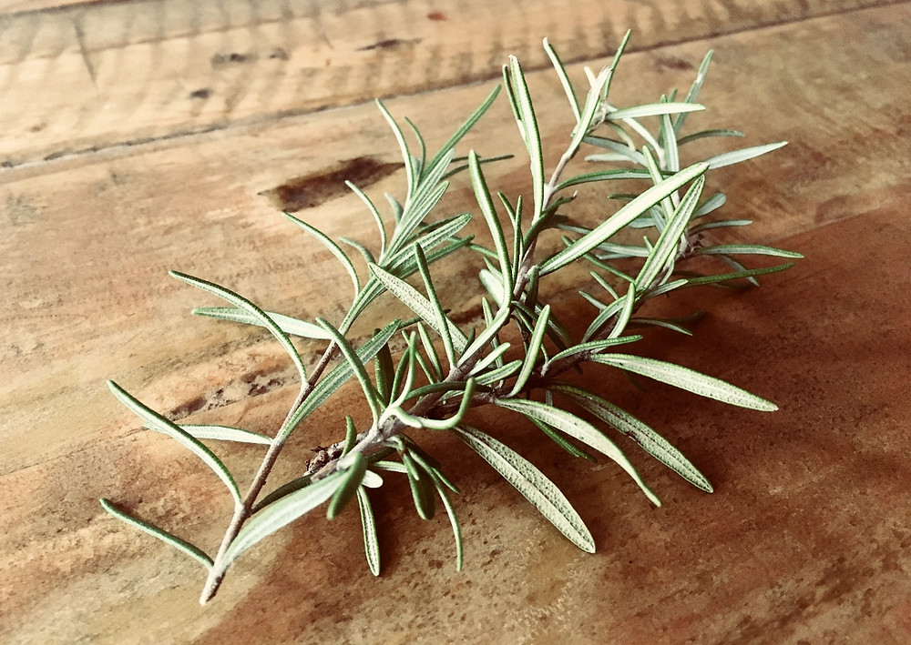 Rosemary for Anzac Day