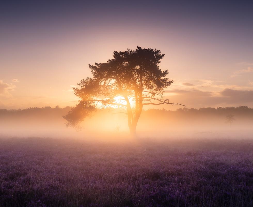 TK-20200830-Westerheide-Sunrise-Mist0137