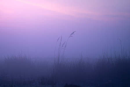 TK-20200416-Zaanse-Schans-ochtend-mist-0