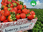 Fresh Florida Strawberries
