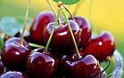 Washington Sweet Red and Rainier Cherries