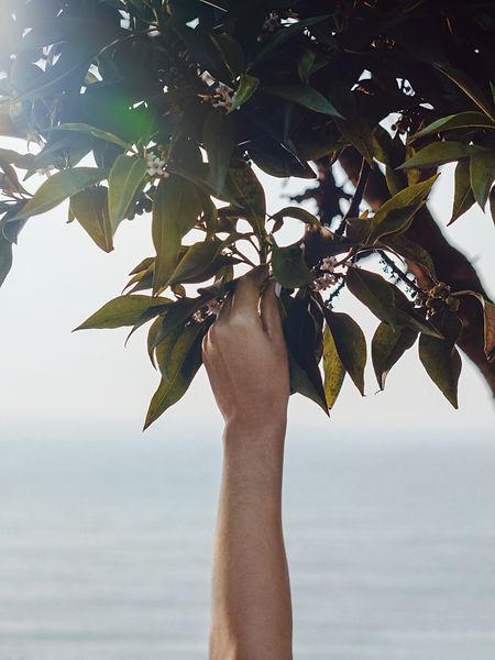 hand-touching-green-leaves-4171495.jpg