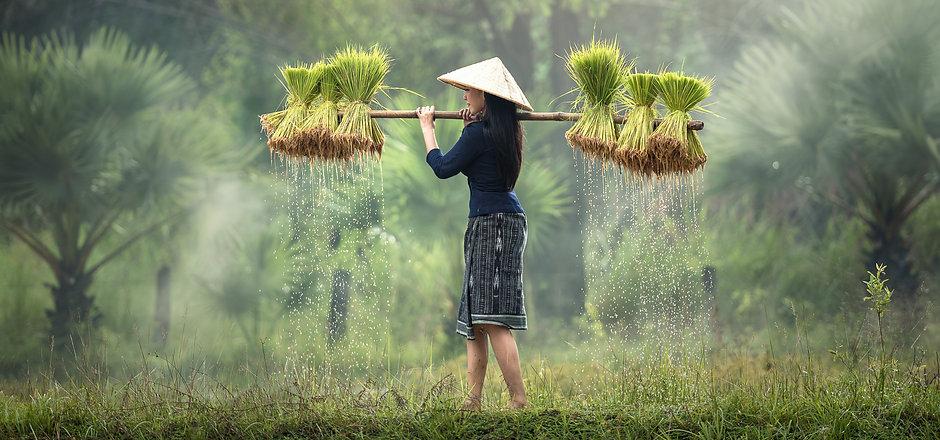 Canva - Asian Woman Carrying Rice Seedli