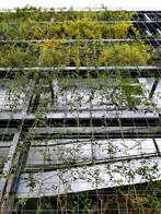 Growing vegetation process
