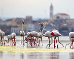 birdwatching-lesina-fenicotteri.jpg