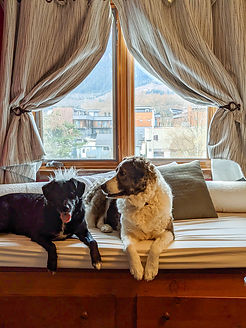 Howe Sound Inn-Dog Friendly Room Squamis