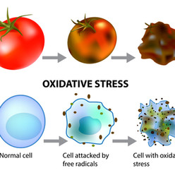 How does Oxidative Stress affect your Brain and Body?