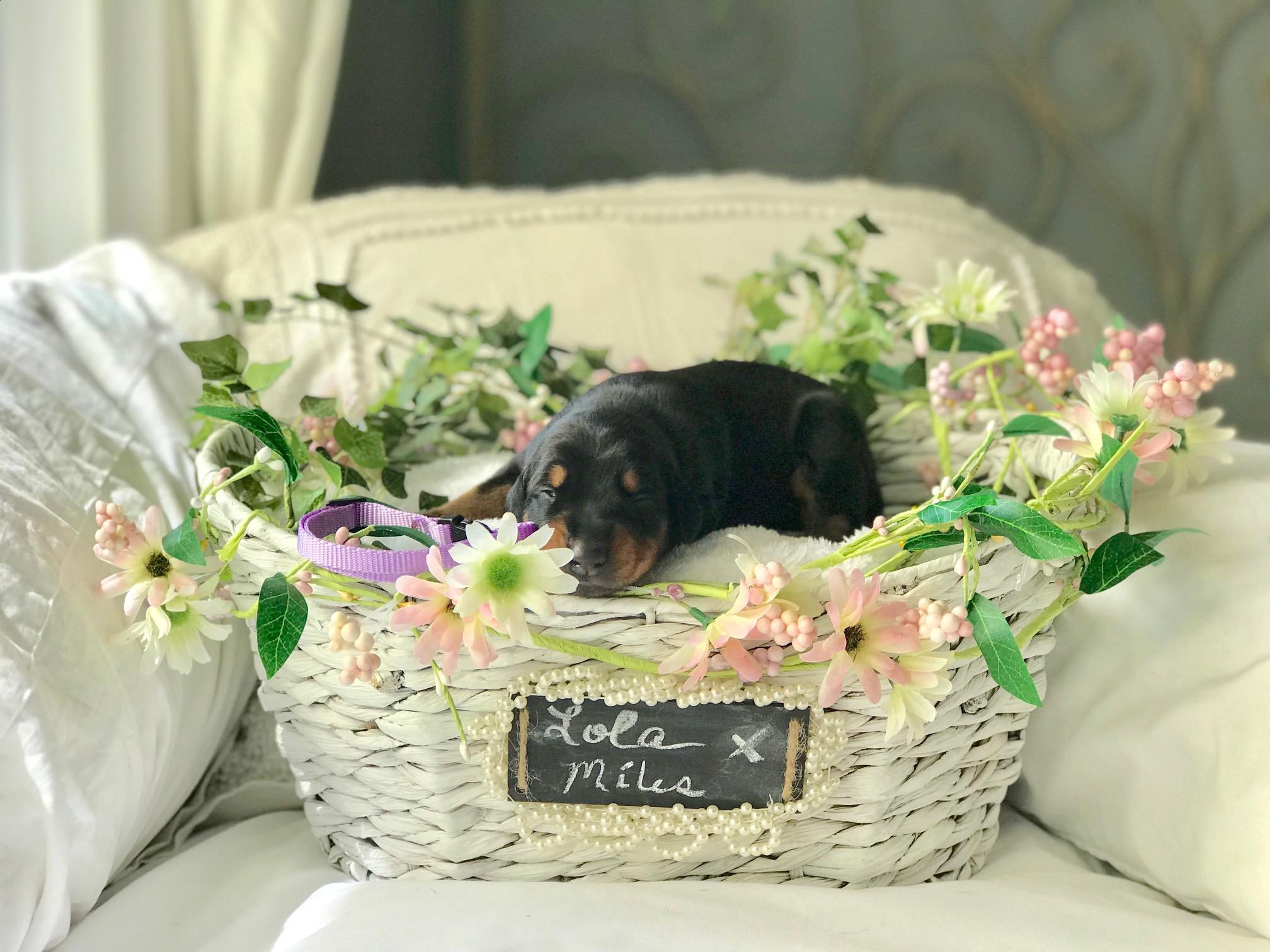 Lilac Girl 1 Week