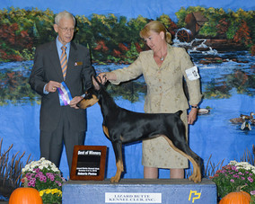 WB/BOW October 2015, first time in the ring at 6 mos, handled by Carla Giroux