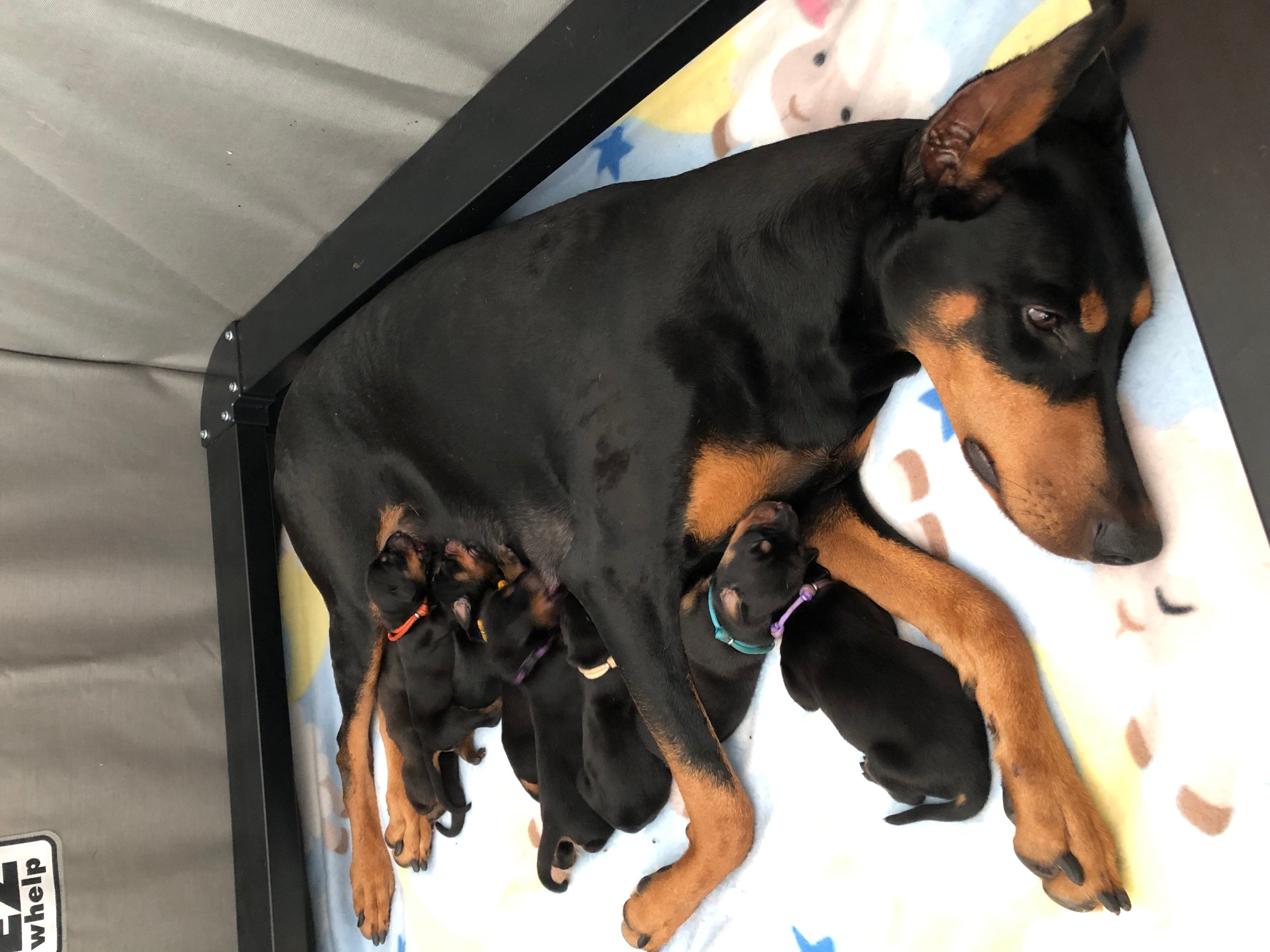 Lola Puppies Day 3