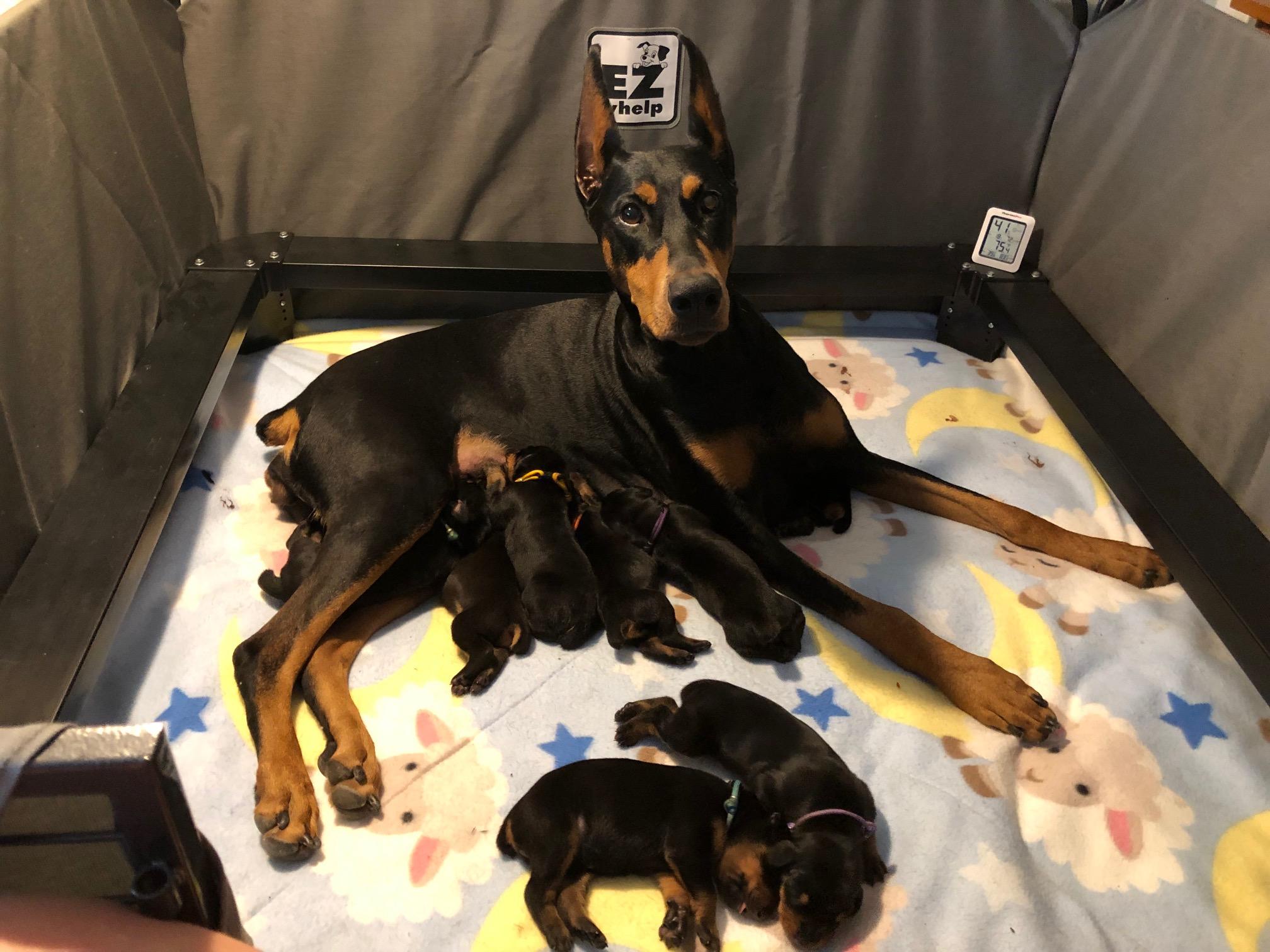 Lola Puppies Day 6