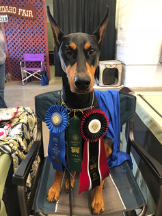 Lola earns her CD with a 1st place November 2018