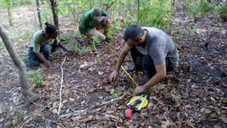 El impacto humano reduce la diversidad cultural y conductual de los chimpancés