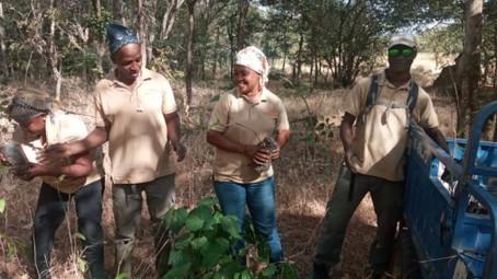 Plantamos más árboles para los chimpancés y repartimos árboles frutales para la gente