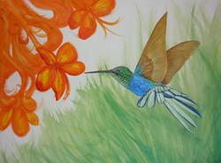 Hummingbird stage 3