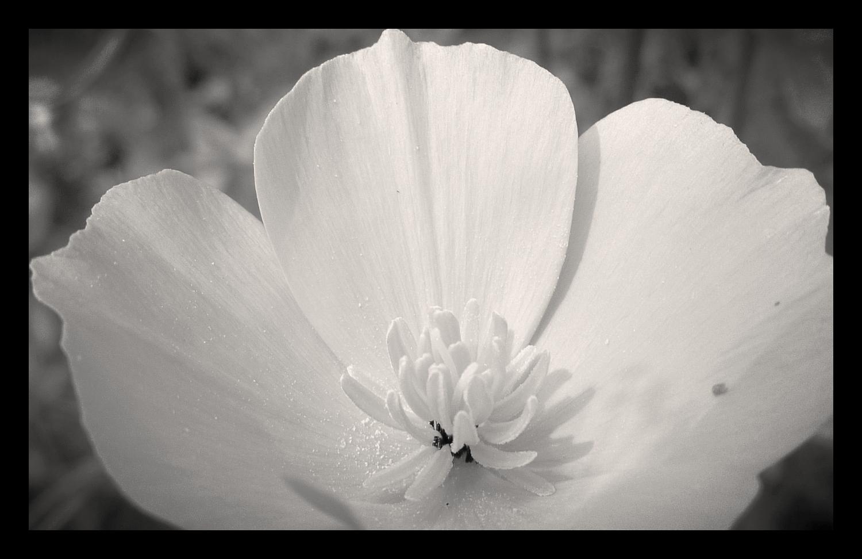 flower in flower
