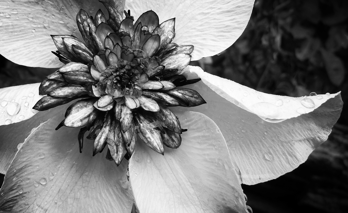b&w winged flower