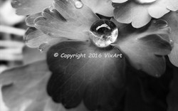 Dew drop on clover