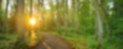 slider-woods-path-sm (1).jpg