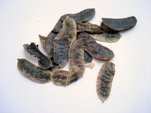 Cassia angustifolia frutti interi