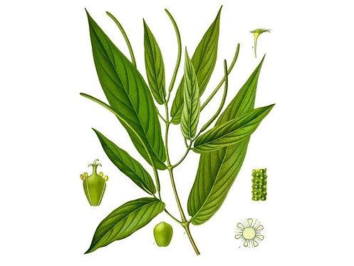 Muira puama legno ( Ptychopetalum olacoides Benth.)