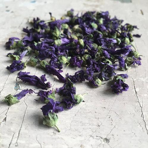 Malva fiori ( Malva sylvestris L.