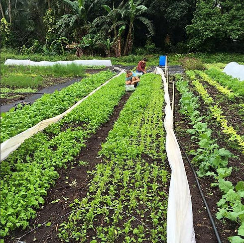 florida farmer.jpg