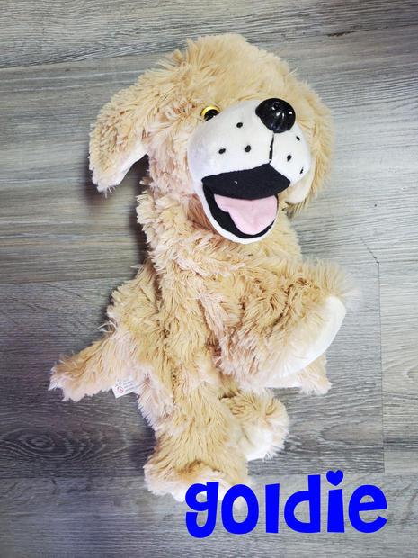 Dog Goldie.jpg