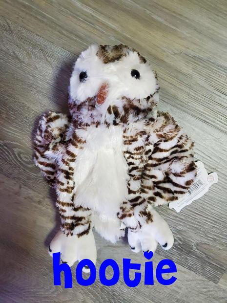 Owl Hootie.jpg