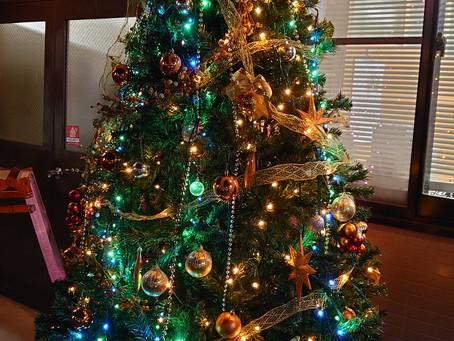 今年もやってきました♪ クリスマスツリー