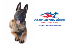 Fast Action Dogs