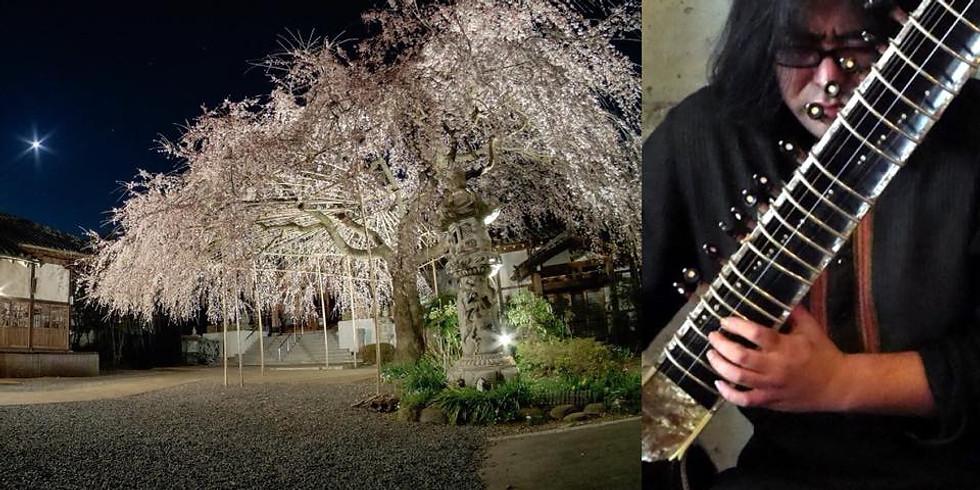 釈尊降誕会花まつり「しだれ桜観月祭」