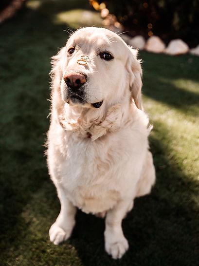 Perro con anillos de boda