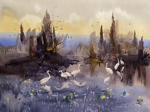 """Evening on the lake. White birds"""