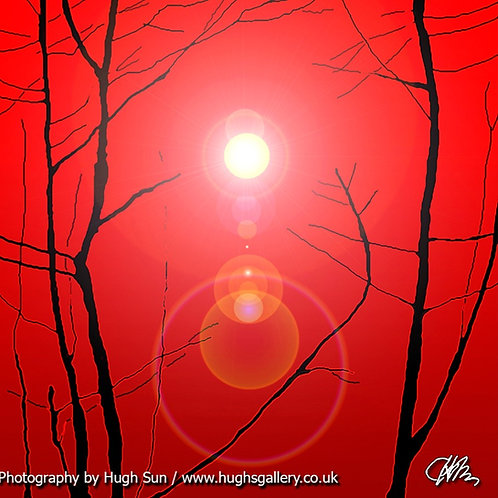 ST1-Sun and Trees