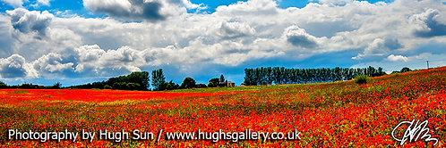 PO1-Poppies and Land (Panoramic)