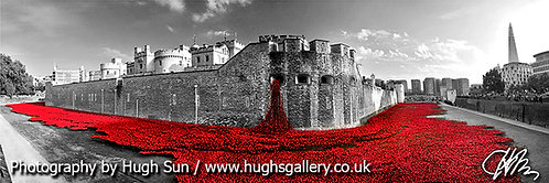 TW3-Poppies at Tower of London (Panoramic + B/W)