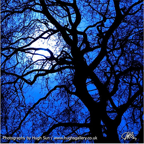 MT1-Moon and Trees