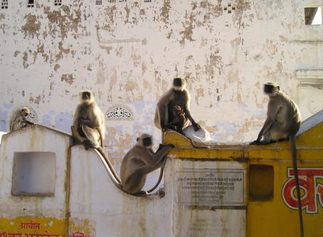 """Was machen Sie mit den """"Affen"""" ihrer Mitarbeiter?"""