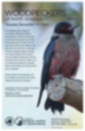 WoodpeckerNA-11.12.19.jpg