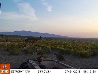 Dawn on the desert.jpg