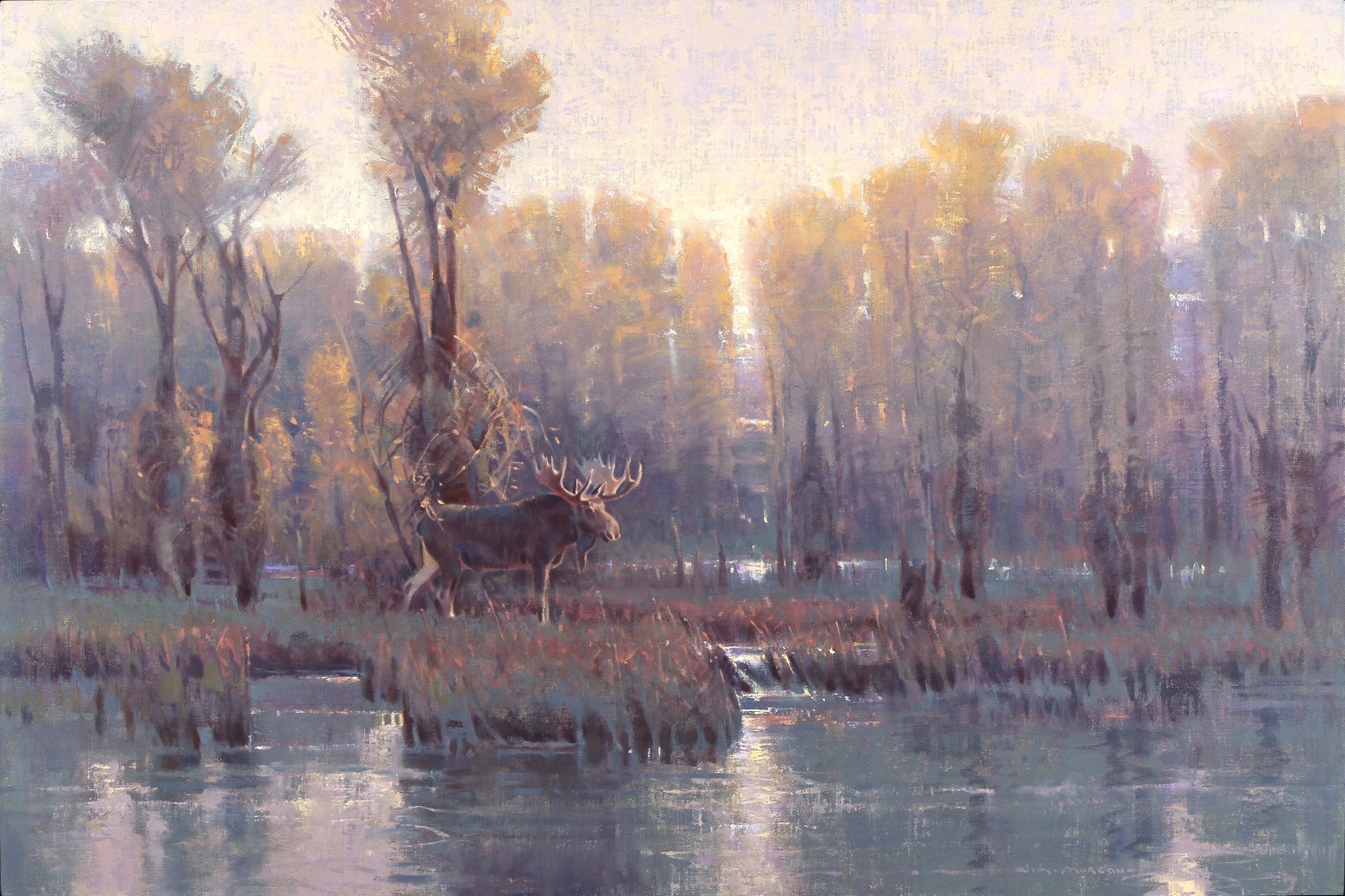 Backwater Dawn