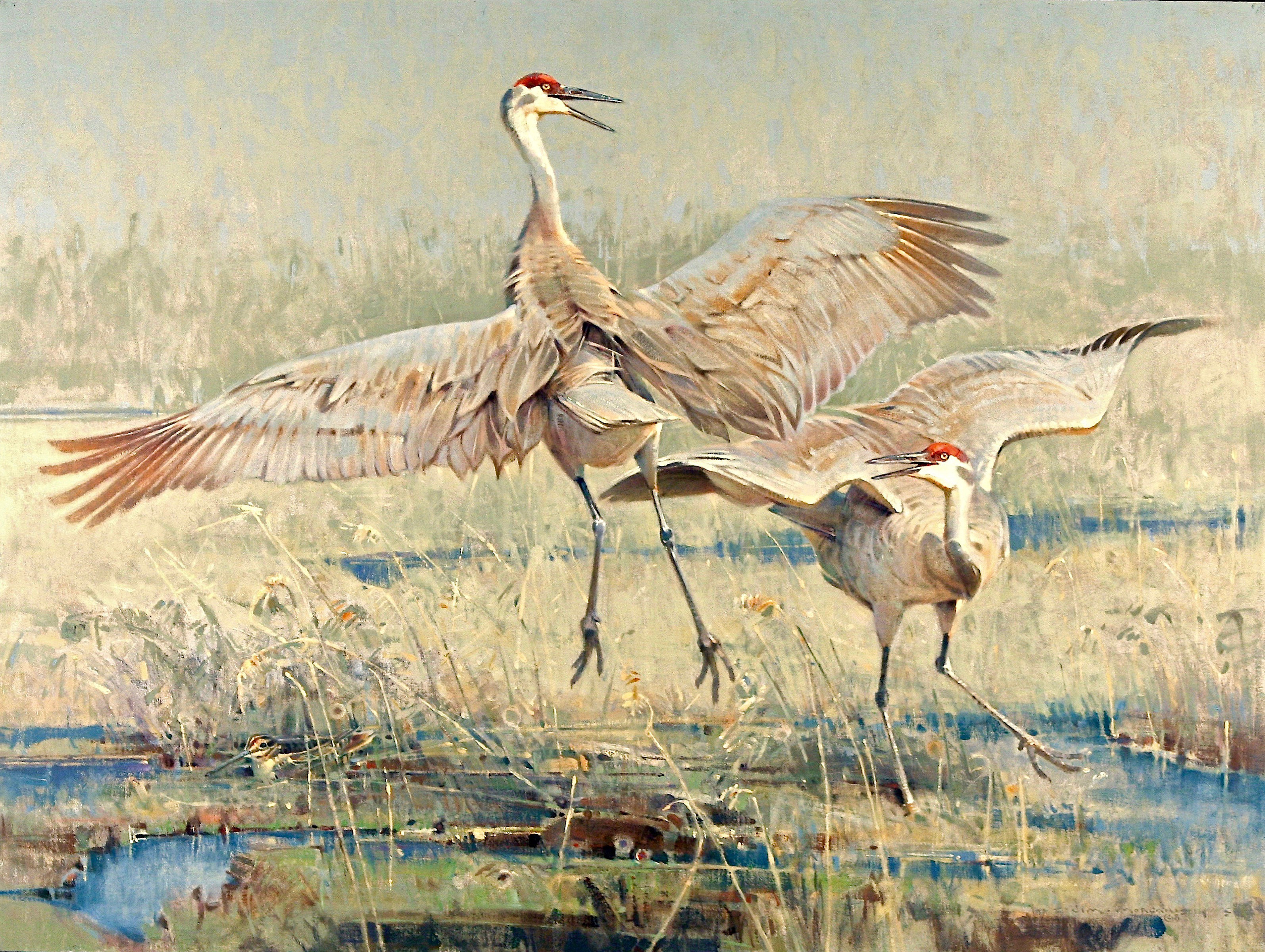 Courting Sandhill Cranes and Concerned