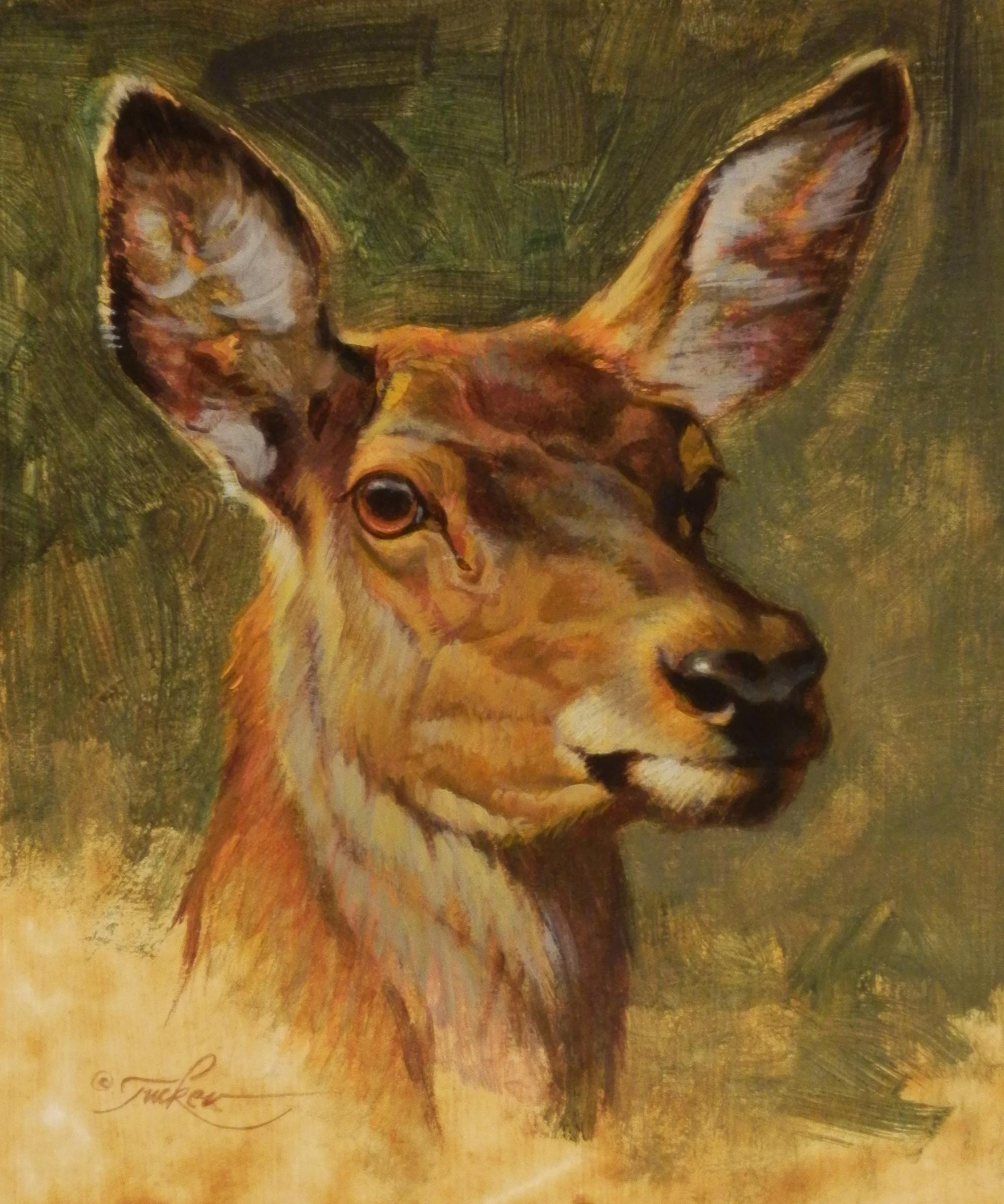 """Red Deer Portrait"" by Erza Tucker"